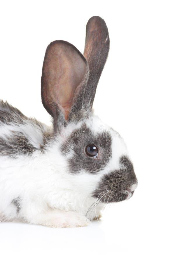 Un coniglio fotografia stock