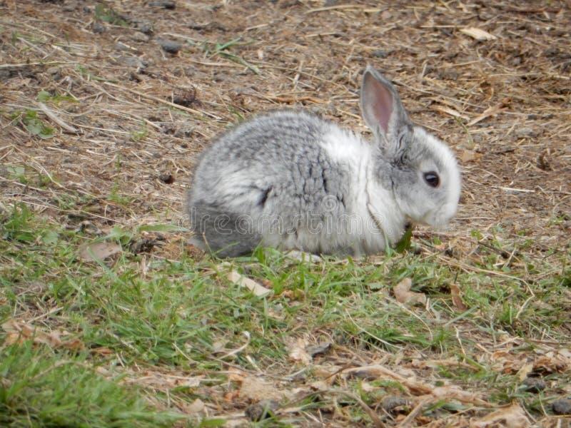 Un coniglio immagini stock libere da diritti