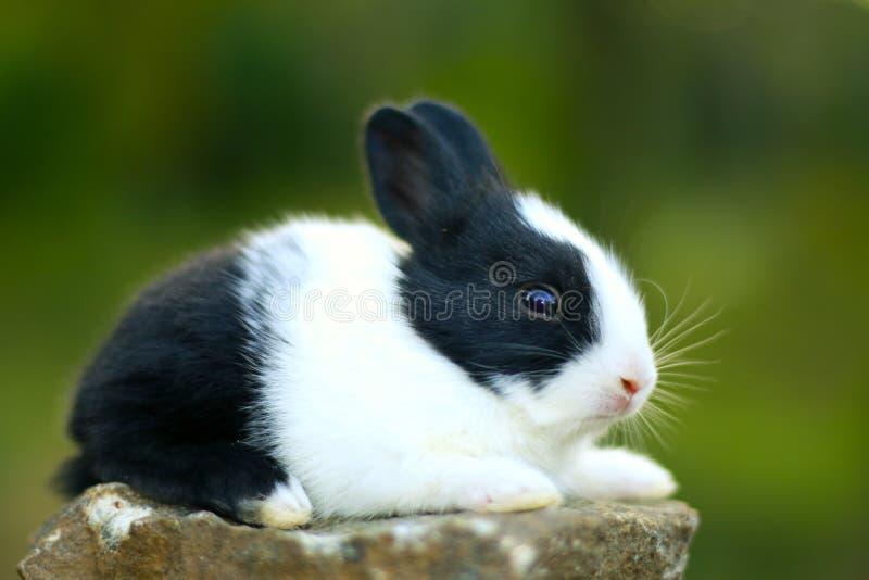 Un coniglio sveglio del bambino fotografie stock