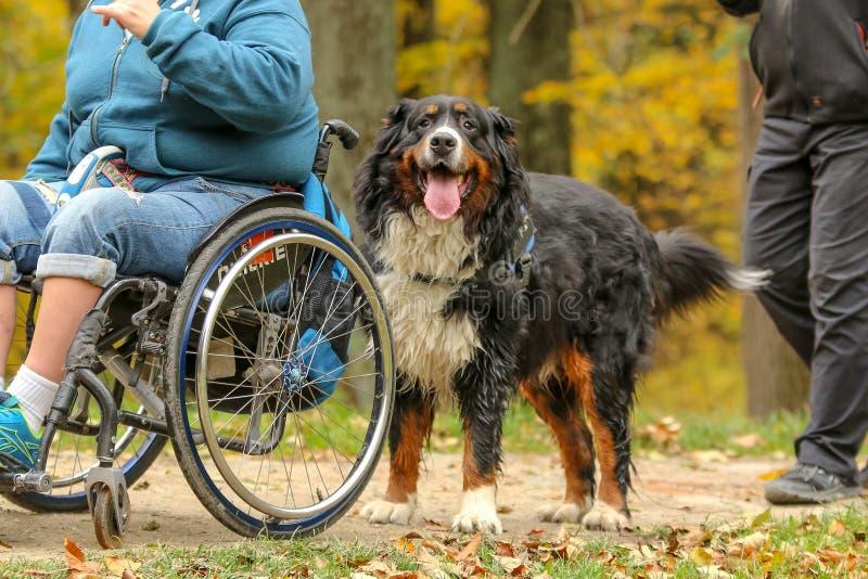 Un contributo al disabile - un cane fotografia stock