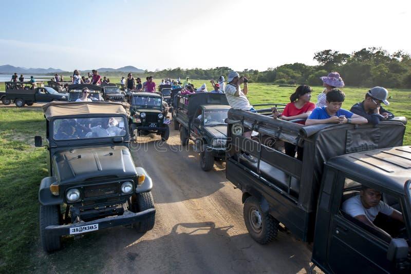 Un convoy de jeeps del safari que llevaban a turistas parqueó adyacente al tanque en el parque nacional de Minneriya en Sri Lanka imágenes de archivo libres de regalías
