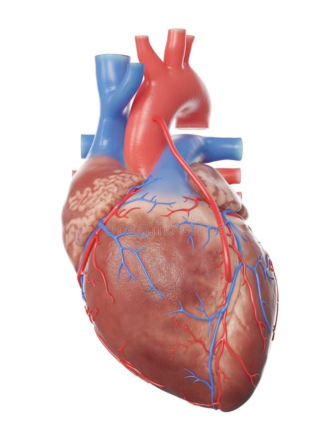 Un corazón con puente stock de ilustración