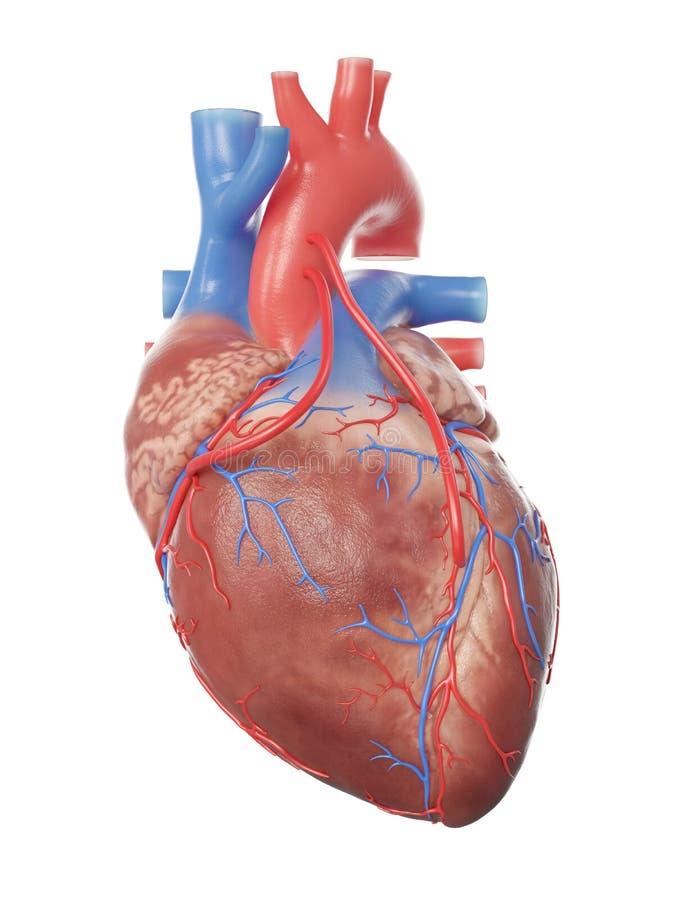 Un corazón con 2 puentes stock de ilustración