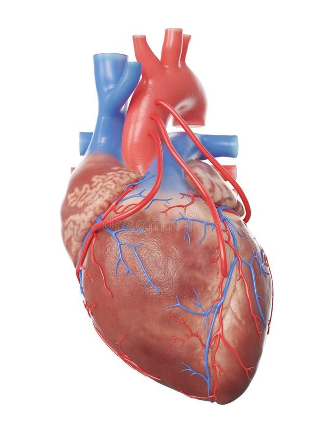Un corazón con 3 puentes libre illustration