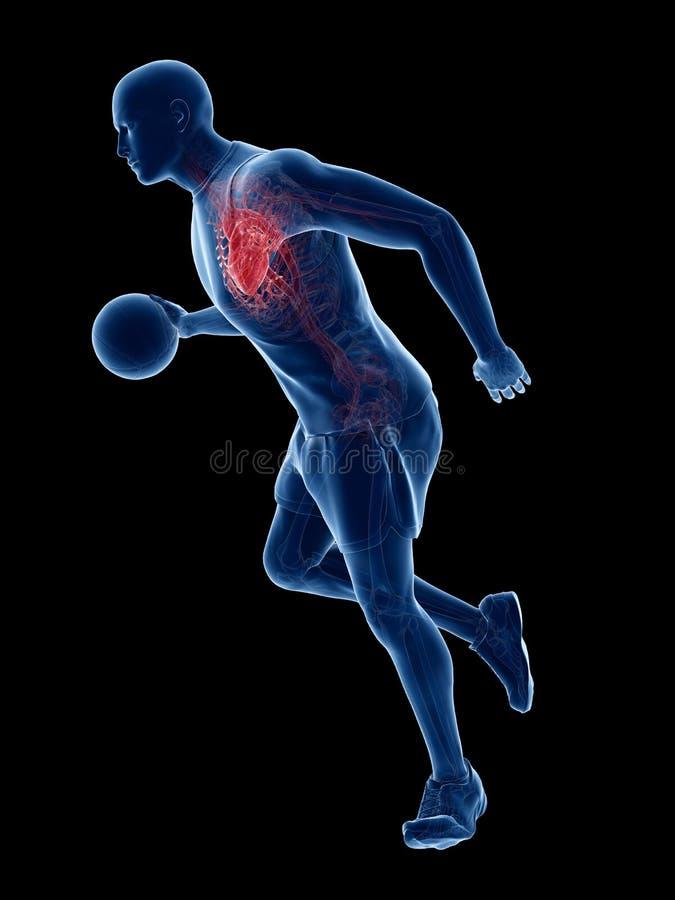 Un corazón de los jugadores de básquet ilustración del vector