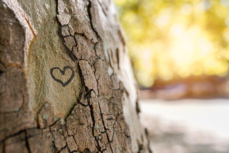 Un corazón en un árbol imagen de archivo libre de regalías