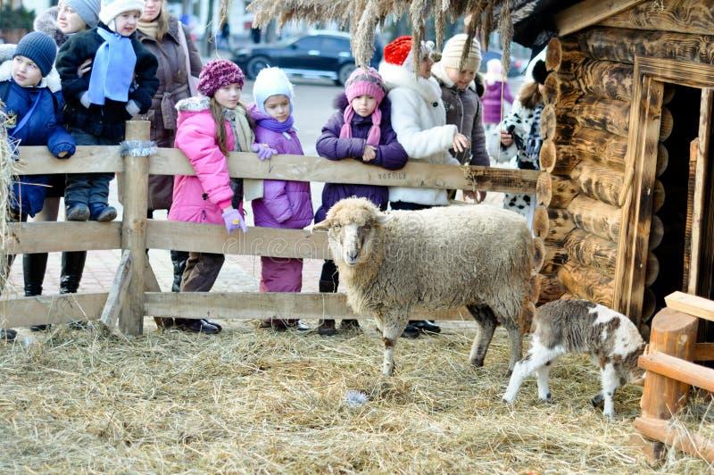 Un cordero y una oveja cerca de la escena de la natividad imágenes de archivo libres de regalías
