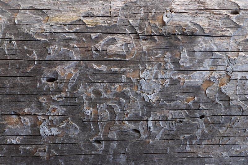 Un corte de un tronco de madera con las grietas y los anillos anuales para el uso como un fondo o textura foto de archivo libre de regalías