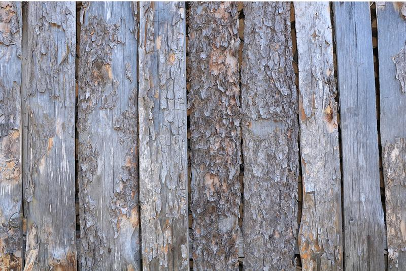 Un corte de un tronco de madera con las grietas y los anillos anuales para el uso como un fondo o textura fotos de archivo