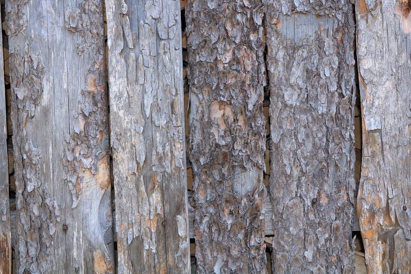 Un corte de un tronco de madera con las grietas y los anillos anuales para el uso como un fondo o textura fotos de archivo libres de regalías