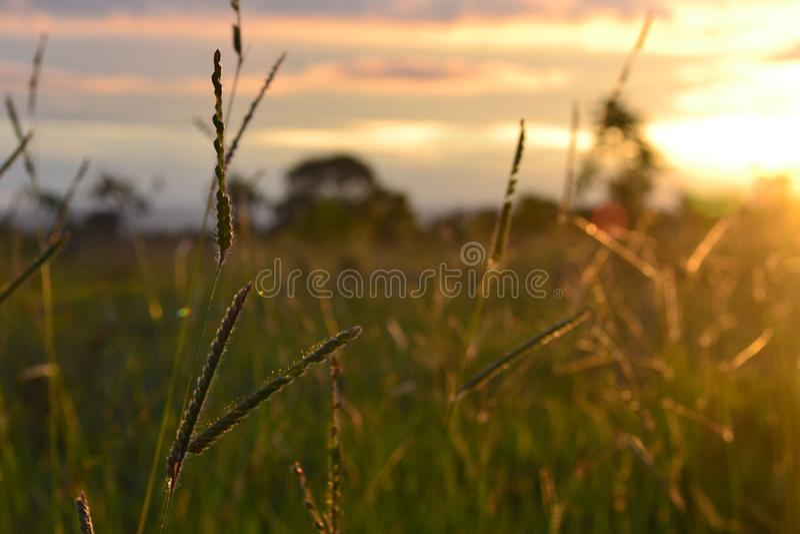 Un coucher du soleil dans Cerrado photo stock