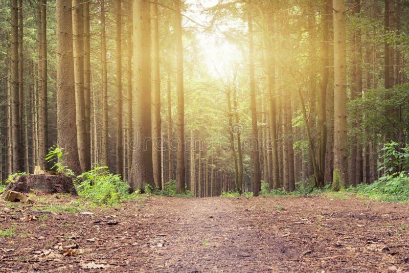 Download Un Coucher Du Soleil Dans La Forêt Paisible Sur Un Chemin Image stock - Image du allemagne, lumière: 76078137