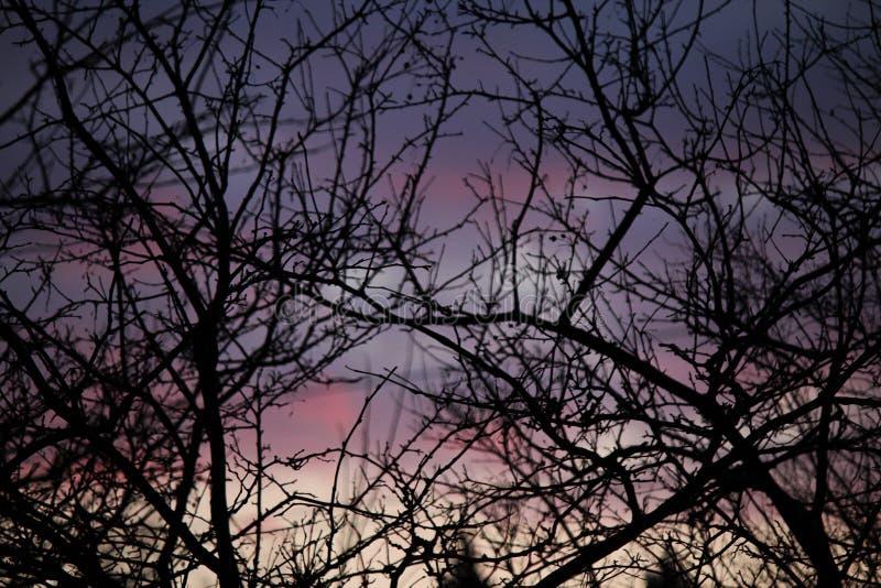 Un coucher du soleil hivernal vibrant image stock