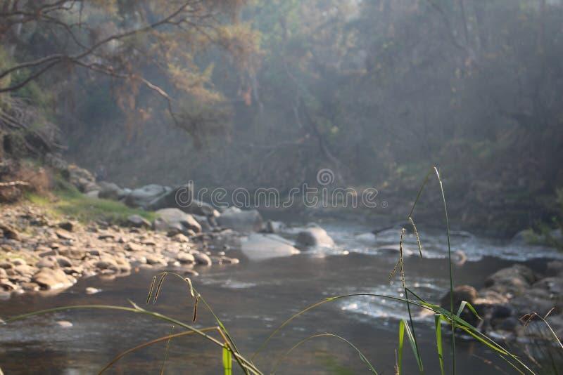 Un courant en brume brumeuse de matin photos stock