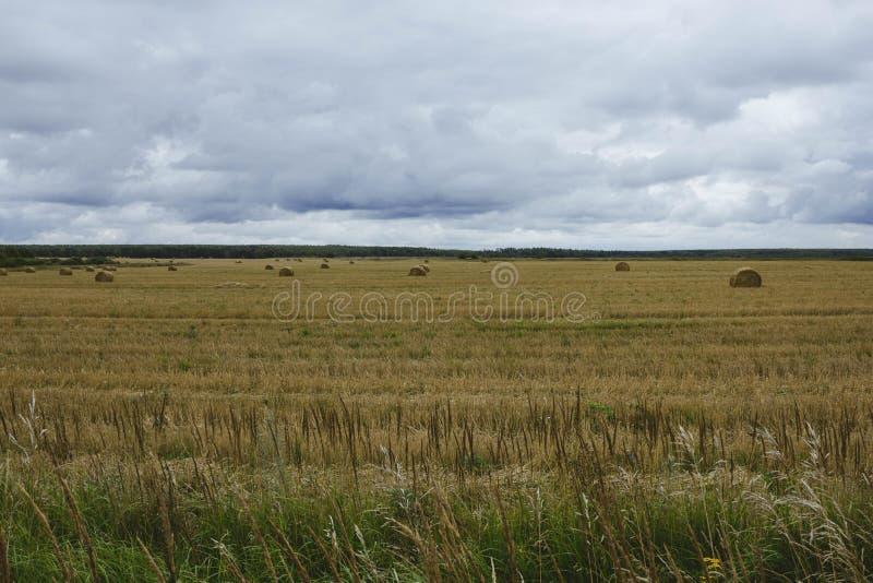 Un covone di fieno sul campo giallo di autunno su un cielo nuvoloso del fondo Il raccolto di fieno Paesaggio di autunno nel campo immagine stock libera da diritti