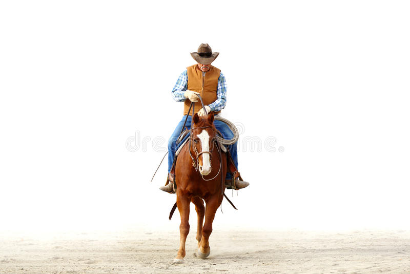 Un cowboy che monta il suo cavallo, backgrou bianco isolato fotografie stock libere da diritti