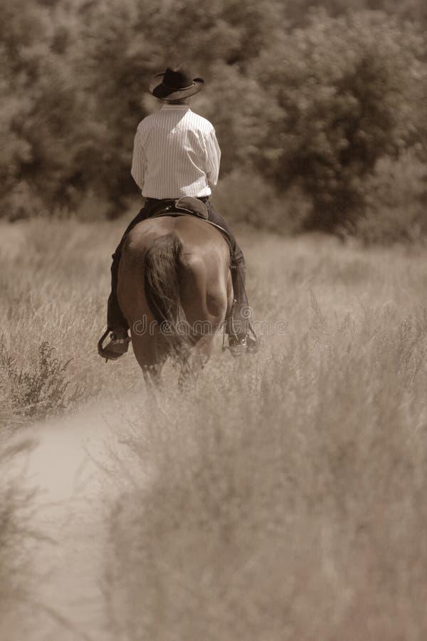 Un cowboy montant son cheval. images libres de droits