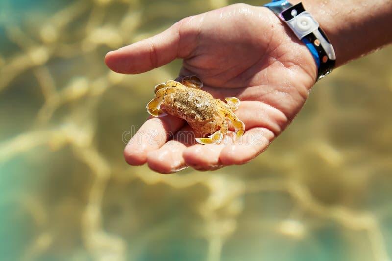 Un crabe de participation d'enfant en main sur la plage photographie stock