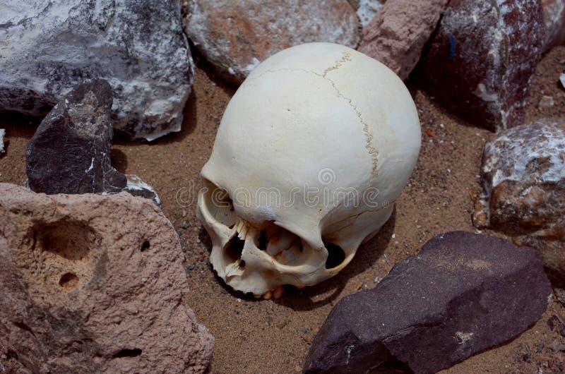 Un cranio al cimitero di Chauchilla fotografie stock libere da diritti