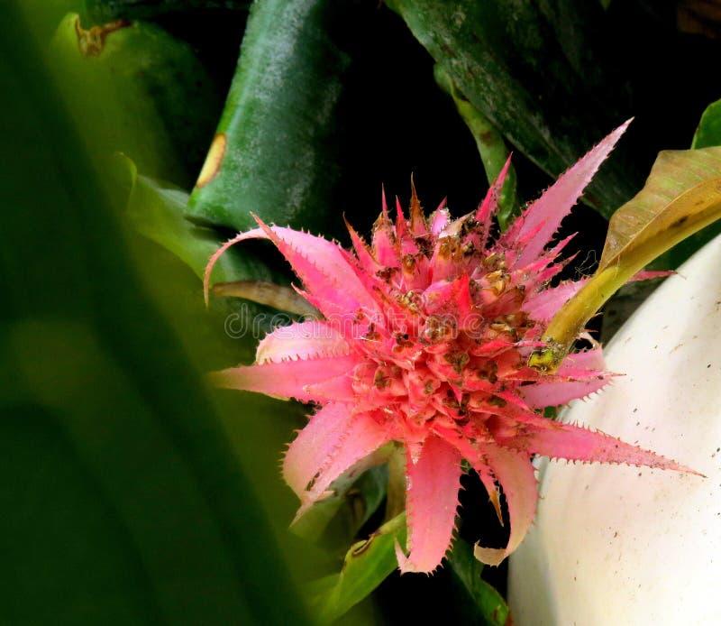 Un crecimiento de flor salvaje rosado hermoso en la tierra imagenes de archivo