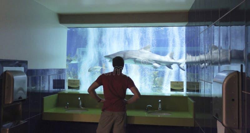 Un cuarto con una visión, acuario del ` s de los hombres de OdySea fotografía de archivo