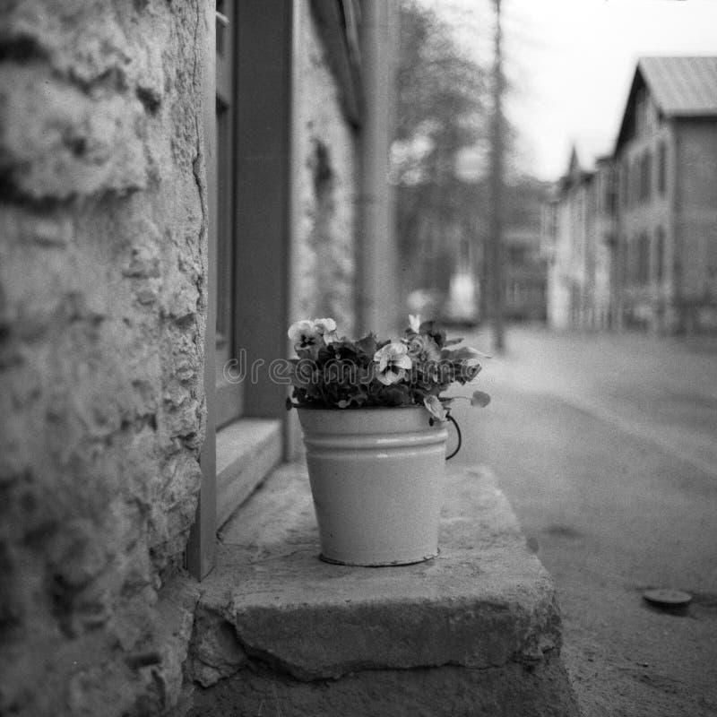 Un cubo con las flores imagenes de archivo