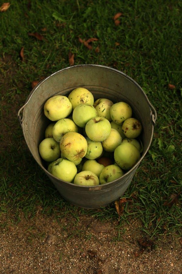 Un cubo de manzanas orgánicas fotografía de archivo