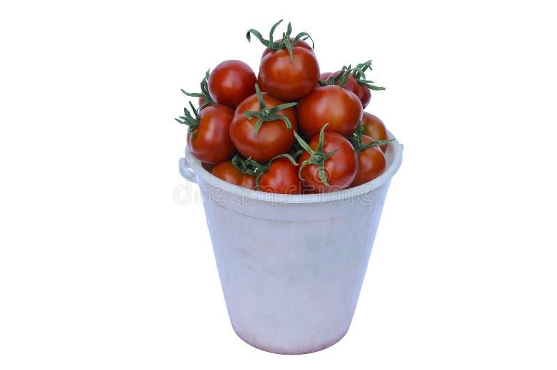 Un cubo llenado de los tomates maduros fotografía de archivo libre de regalías