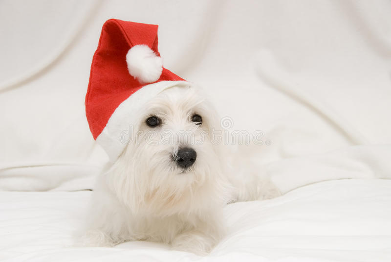 Un cucciolo nel natale. fotografia stock libera da diritti