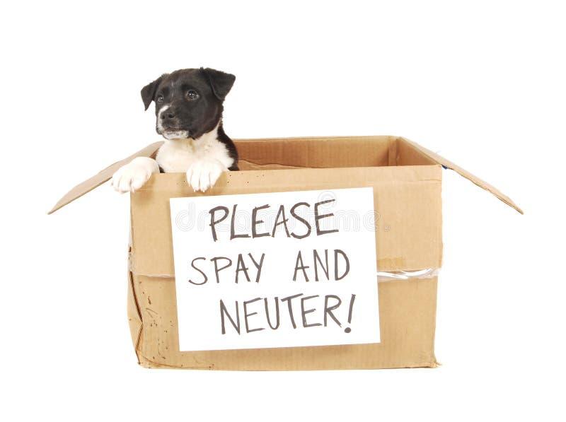 Un cucciolo in una scatola di cartone. fotografie stock