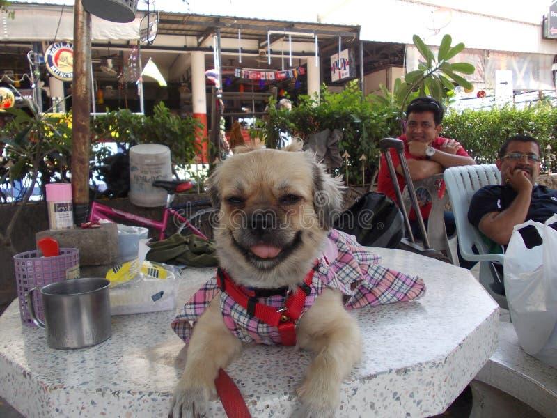 Un cucciolo vestito in un hotel in Thailandia fotografia stock
