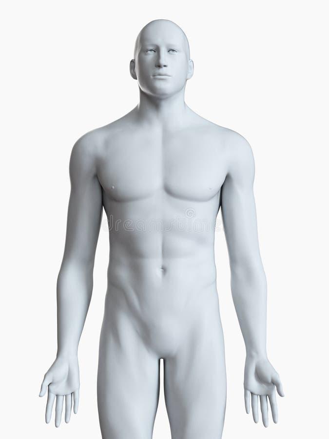 Un cuerpo masculino gris ilustración del vector