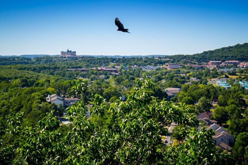 Un cuervo americano en Branson en el sudoeste Missouri imagen de archivo libre de regalías