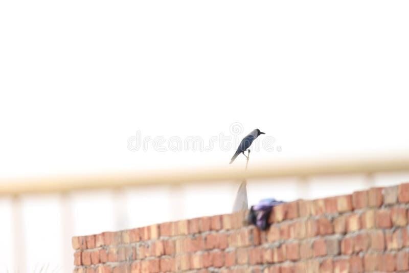 Un cuervo que se sienta en el top fotografía de archivo