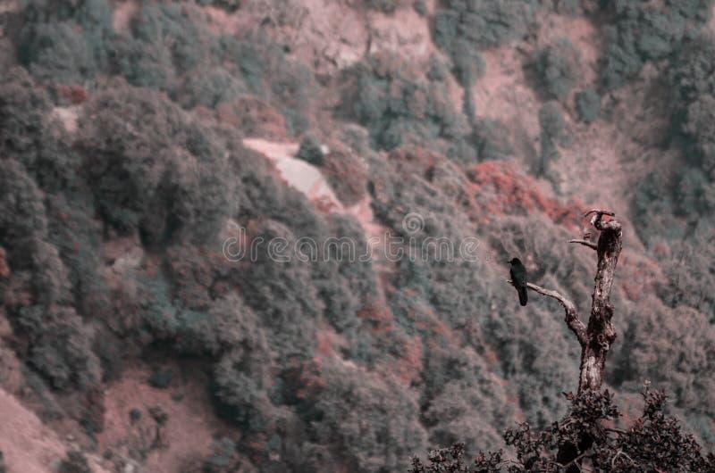 Un cuervo se sienta en el árbol fotografía de archivo