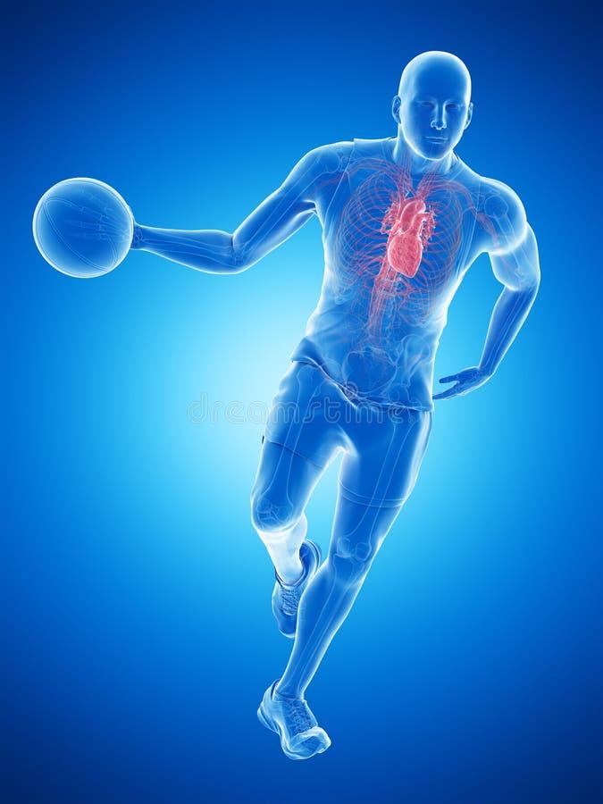 Un cuore dei giocatori di pallacanestro illustrazione vettoriale