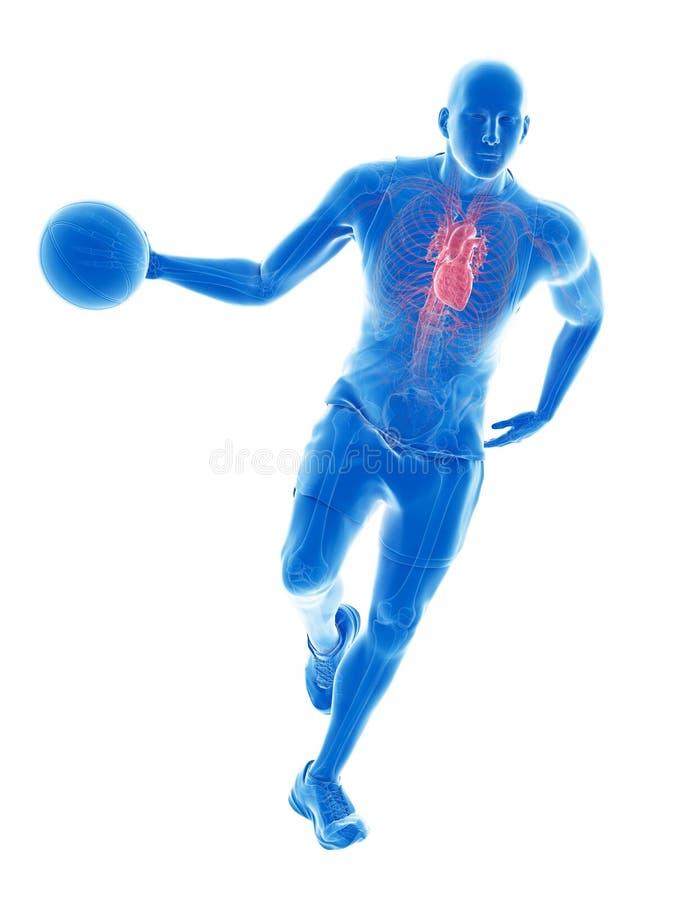 Un cuore dei giocatori di pallacanestro royalty illustrazione gratis