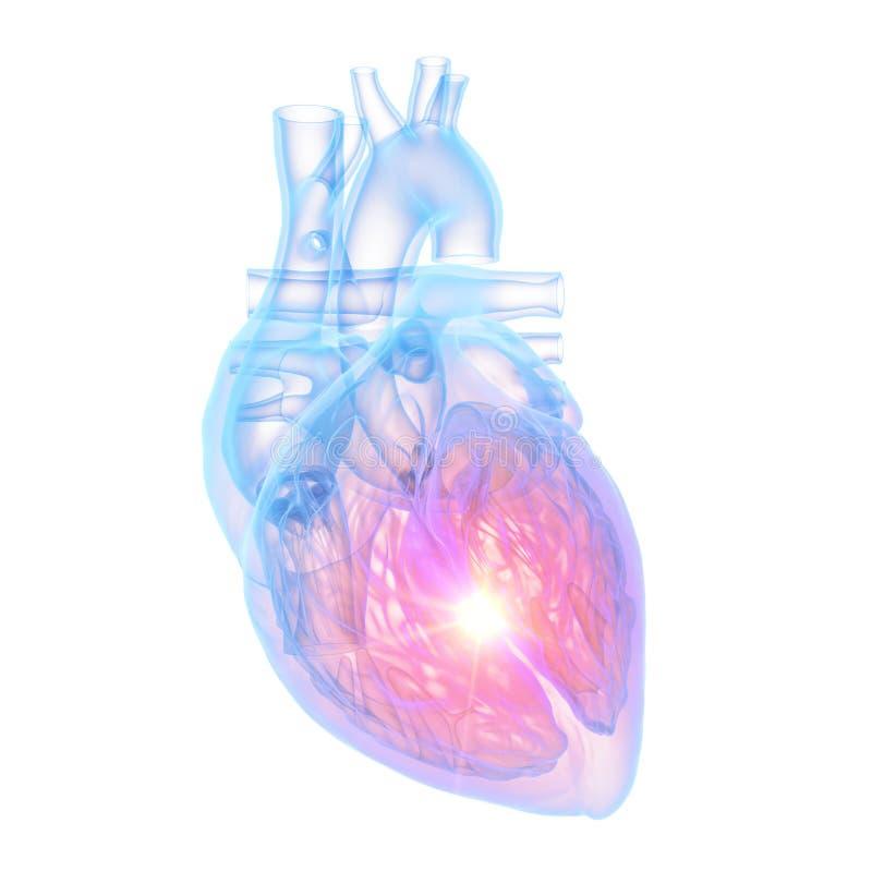Un cuore umano royalty illustrazione gratis