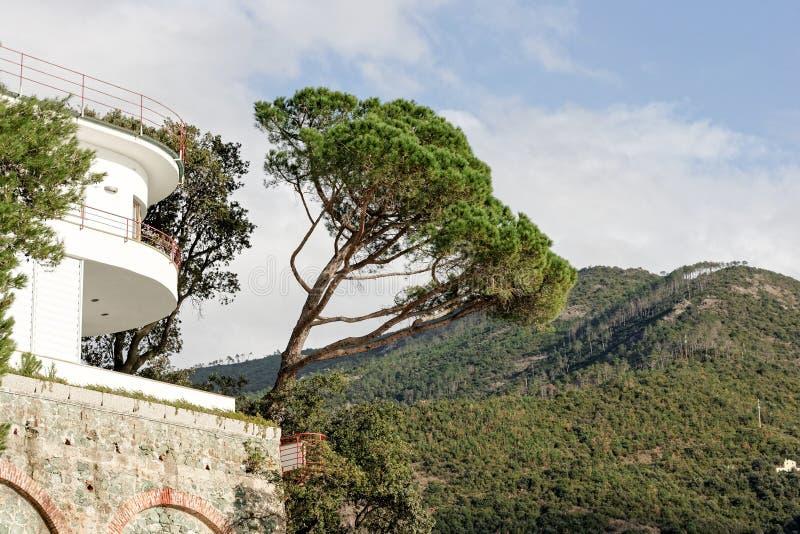 Un détail d'un arbre de pin photos libres de droits
