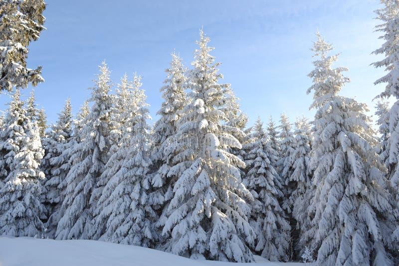 Un día de invierno escarchado imagen de archivo libre de regalías
