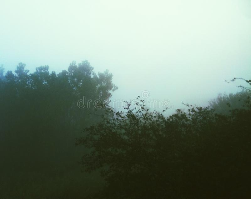 Un día de niebla para los árboles imagen de archivo