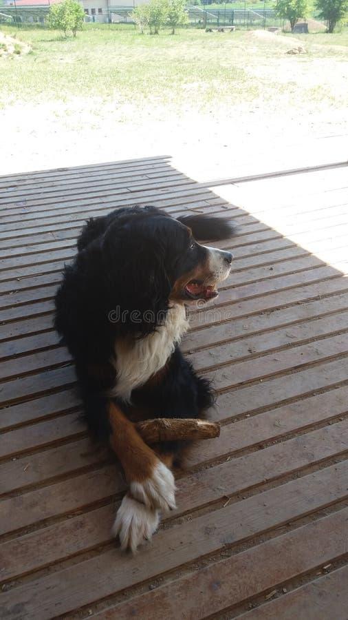 Un día de perros foto de archivo