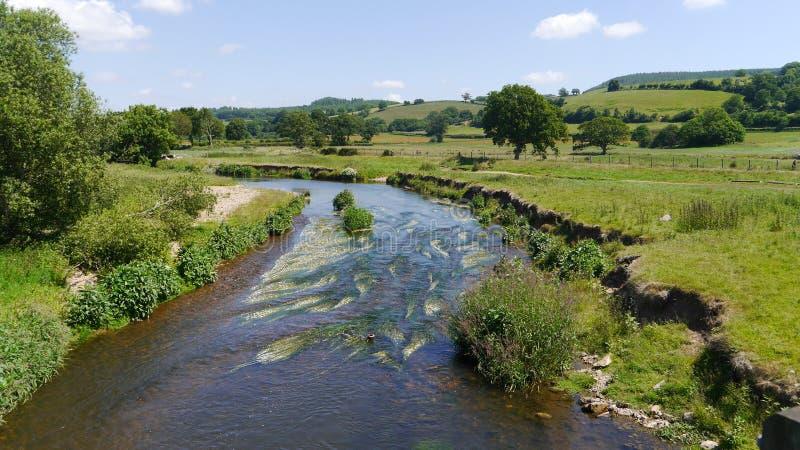 Un día de veranos por la nutria de río en Devon Reino Unido fotos de archivo libres de regalías