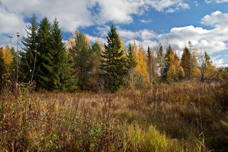 Un día en el bosque del otoño fotografía de archivo