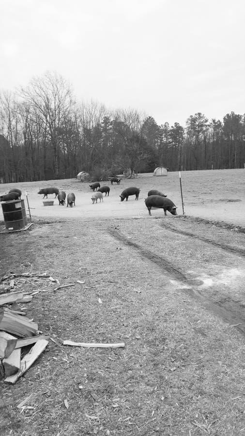 Un día en la granja foto de archivo libre de regalías