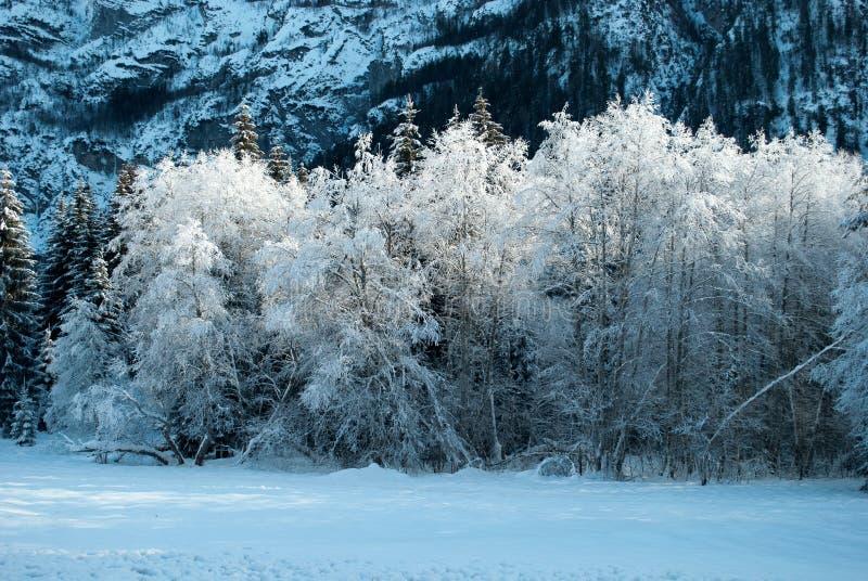 Un día frío foto de archivo libre de regalías