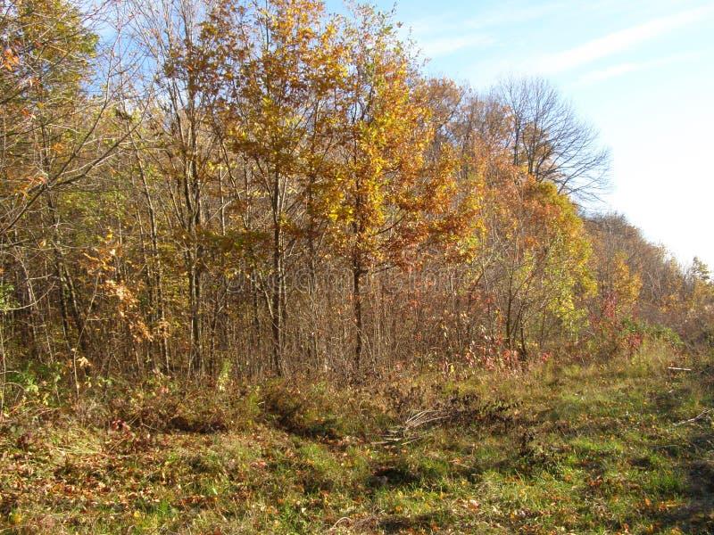 Un día hermoso del otoño en el bosque imagen de archivo libre de regalías
