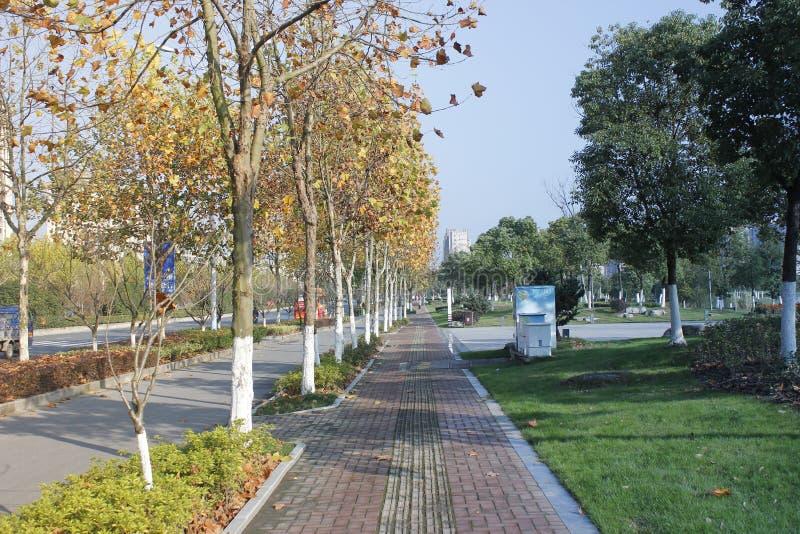 Un día soleado común después de la lluvia y el caminar a lo largo del camino con la visión especial foto de archivo