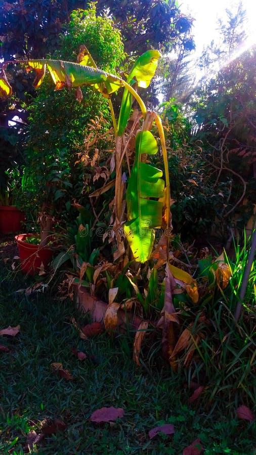 Un día soleado de una planta imagen de archivo