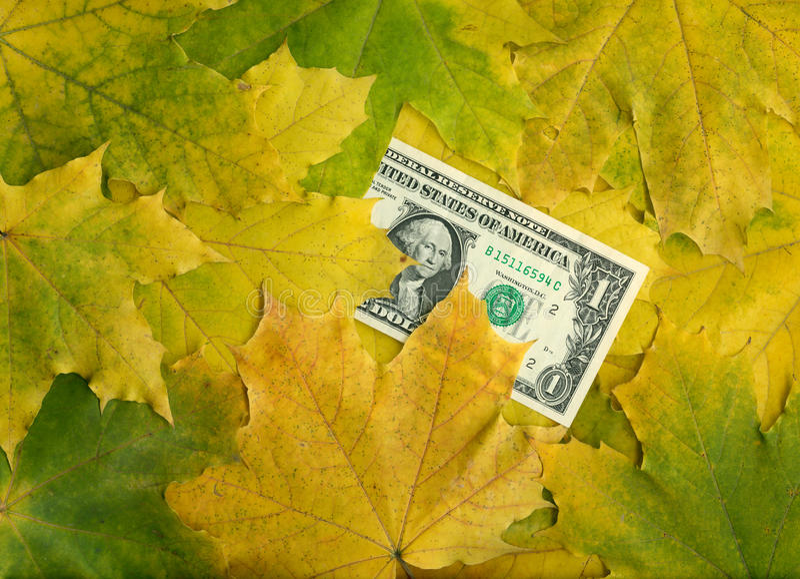 Un dólar en hojas de arce del otoño fotos de archivo